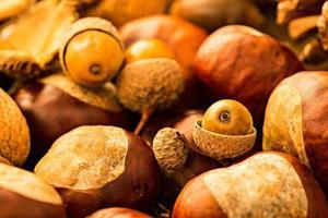 dekorativ höstkant med nötter foto