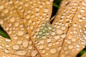 brunt blad och vattendroppar