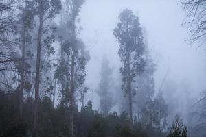 träd i dimman foto