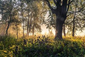 mystisk morgontid i träskområdet
