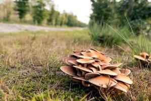 svamp i en höstskog på en solig dag foto