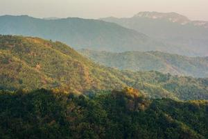tropisk regnskog, i phu hin rong kla nationalpark