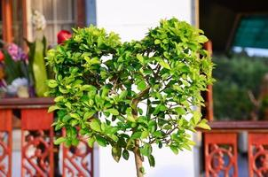 grönt hjärtformat träd foto