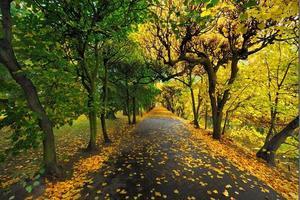 samling av vackra färgglada höstlöv / grönt, gult, orange, rött foto