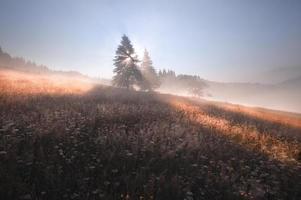 solstrålar mellan trädet på dimmig morgon