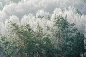 trädtoppar i tonalt perspektiv