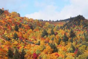 färgglada löv i hachimantai