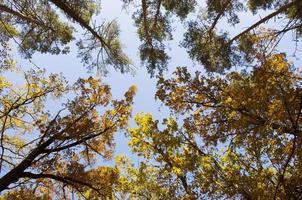 samling av vackra färgglada höstlöv / grönt, gult,