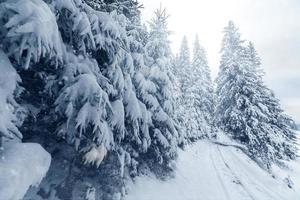träd täckta med rimfrost och snö i bergen foto