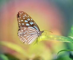 vacker fjäril foto