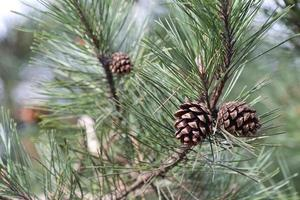 kott på grenar. foto
