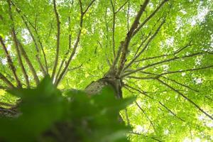 gröna blad på trädtoppen - levande färger foto