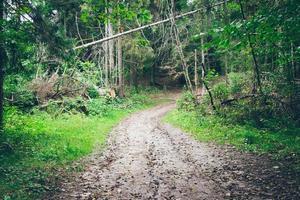 skogsväg med solstrålar. retro kornig film utseende.