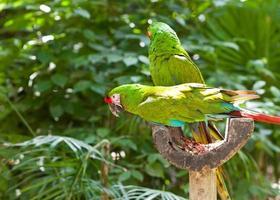 ljusa stora tropiska papegojor sitter på en gren och kommunicerar