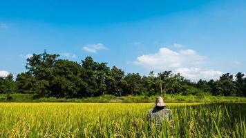 fågelskrämma i risfält bakgrund av skog och himmel. foto