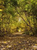vackra färgglada träd gränd i skogen, naturliga backgro höst foto