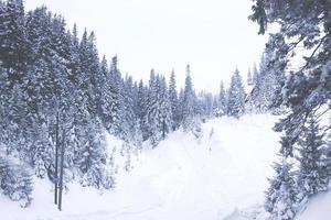 snötäckta granar i bergen, vinterskog foto