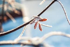 rimfrost och snö på träden i vinterskogen foto