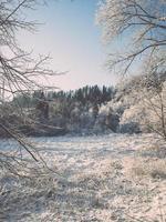 snöig vinterlandskap med snötäckta träd - retro tappning foto
