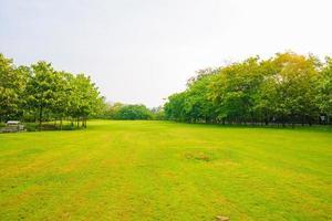 träd i en park med grön gräsmatta foto