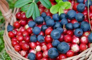 frukter av skog (blåbär abd cowberry) i korgen foto
