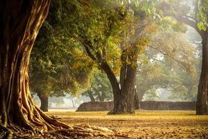 i forntida skog, på morgonen i Thailand. foto