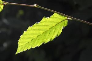 vackra blad av ett träd foto