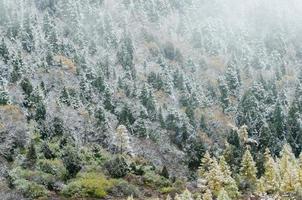 hög bergssluttning med snöig granskog, Huanglong, Kina foto