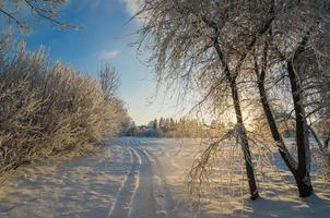 träd täckt med rimfrost mot den blå himlen foto