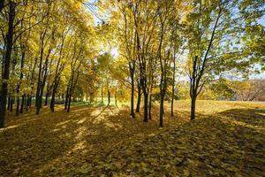 vackra färgglada höstlöv i parken foto