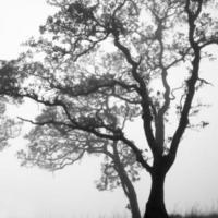 svartvitt träd