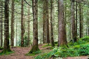 tall träd foto