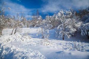 snöigt land foto