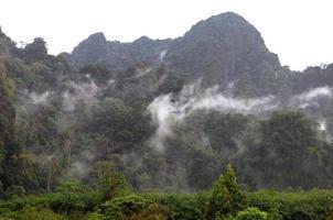 dimmig trädskog på bergslandskapet med dimma, Thailand foto