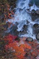 färgglada löv i gully matsukawa foto