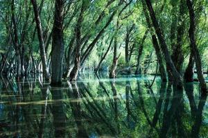 ekskog reflekterad i det klara vattnet i en sjö