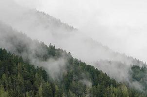 träd i dimma foto