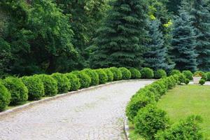 intressant trädgård med kullersten på marken foto
