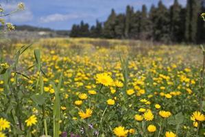 fält full av blommor foto