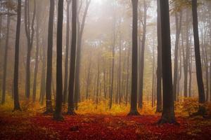 ljus i dimman och mörka träd i skogen