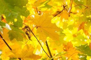 höstens färgglada löv foto