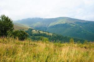sommar i bergen. karpater, ukraina, europa. foto