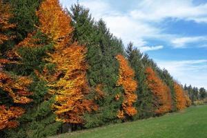 höstlig rad med träd i utkanten av skogen foto