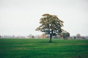 grönt fält med träd i landet. retro kornig film foto