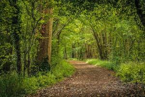 spår genom skogen foto