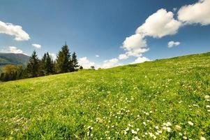 gröna blommor ängar i de karpatiska bergen foto