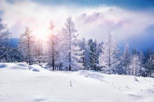 snötäckta träd i bergen foto