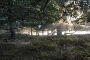 solen skiner genom träd i skogen på dimmigt höstfall