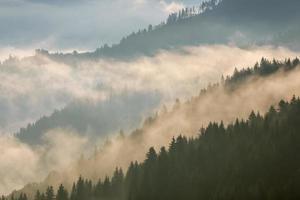 karpaterna. dimma i bergssluttningarna täckt av skog.