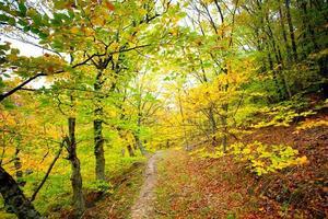 solljus går genom gula och gröna blad i höstskogen foto